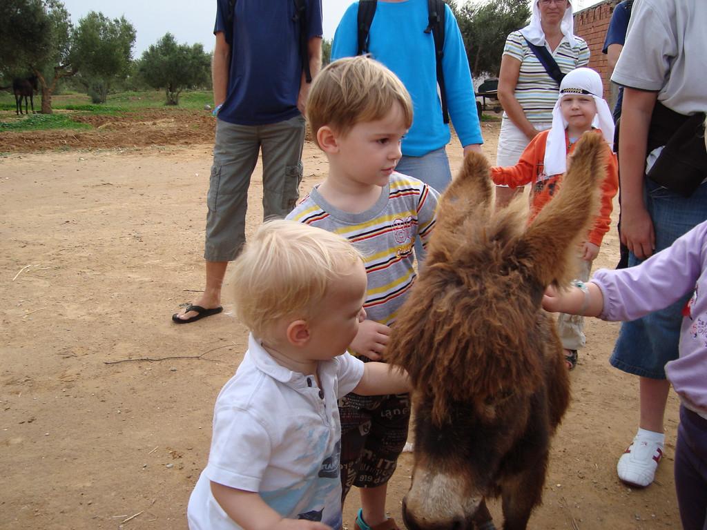 128 Petting the Baby Donkey