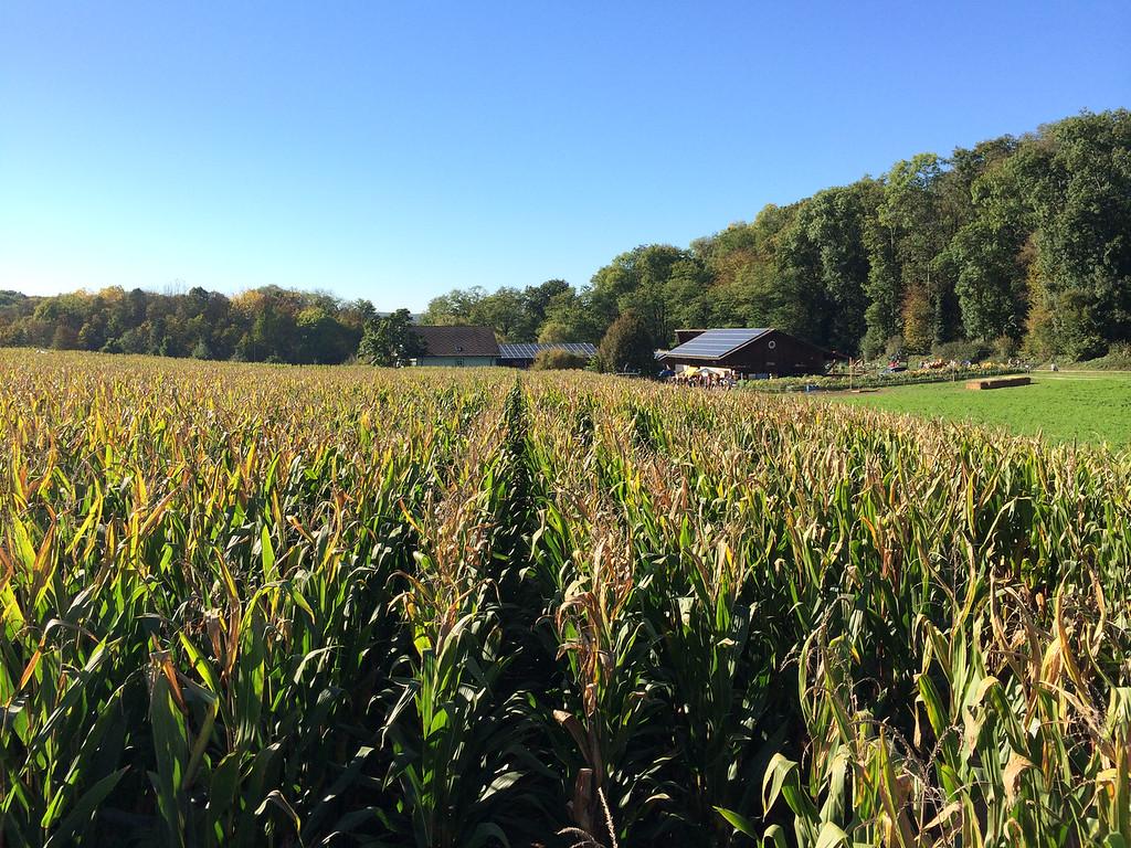 034 Corn Maze